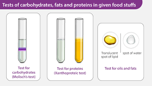 tests of carbohydrates fats and