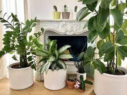 Preferisci qualcosa di piccolo e discreto? Piante D Appartamento 7 Delle Piu Resistenti In Casa Ti Porto Qui