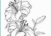 Rosemaling Coloring Pages Astonishing Rosemaling Coloring Pages
