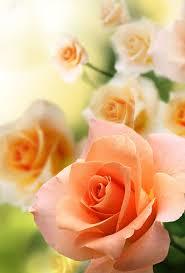 523 best The Flower of Romance images on Pinterest
