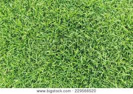 green grass soccer field. Grass Texture Or Background. Green For Golf Course, Soccer Field  Sports Green Grass Soccer Field I