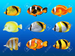 diffe kinds of fish under the ocean ilration stock vector 77514944