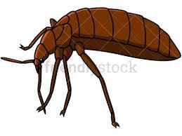 Bed Bug Left Side View Cartoon Vector Clipart FriendlyStock
