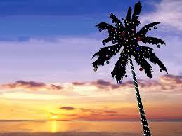 Hawaii Christmas TreeChristmas Tree Hawaii