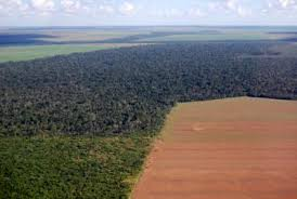 amazon rainforest deforestation. Unique Rainforest Brazil Comprises 23 Of The Amazon Rainforest And Is Home To 13  Remaining In World Brazilu0027s Size Makes It Most Biodiverse  On Rainforest Deforestation N