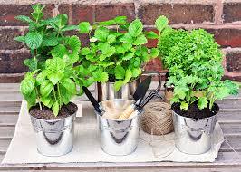 Hanging Kitchen Herb Garden Great Herb Garden Ideas For Your New Sitterle Garden Home