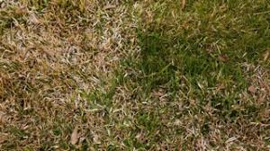 How To Identify Lawn Diseases Scotts