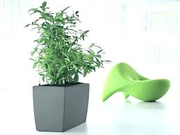 Great office plants Desk Good Office Plant Indoor Plants For Environment Architect Desk Great Best Low Light Variegated Snake De Tall Great Office Plants Tasteofparisinfo Here Are Five Great Office Plants That Have Raft Of Health And