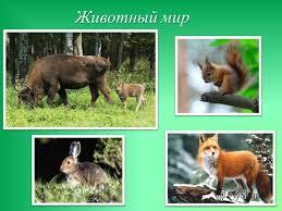 Презентация на тему Природные зоны умеренного пояса Евразии  10 Животный мир