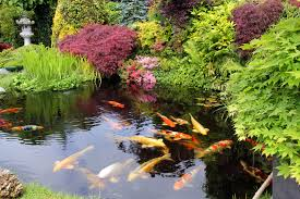 create a true backyard oasis by adding a backyard water garden to your gardens and landscape design our team of experts can assist in the planning and