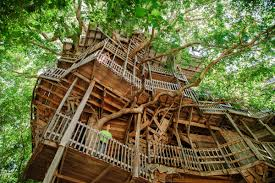 tree house plans for one tree. Treehouse_001 Tree House Plans For One