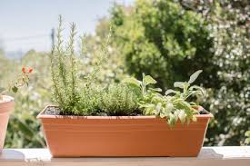 5 herbs for growing in containers