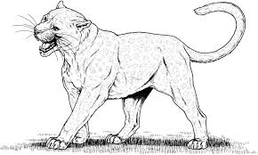 Big Cats Coloring Pages Big Cats Colouring Pages Vitlt New