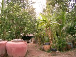 Uses Of Kitchen Garden Ecotipping Point Reverses Deforestation In Thailand The