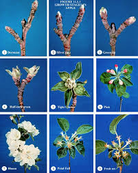 Fruit Tree Dormancy  Organic Gardening BlogDormant Fruit Trees
