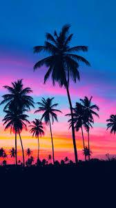 palm trees tumblr vertical. 9 Palm Trees Tumblr Vertical