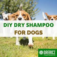 homemade dog shampoo diy essential oil recipe