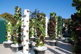 aeroponic tower garden tower garden review not aeroponics aeroponics tower
