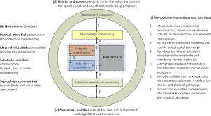 Necrobiome framework for bridging decomposition ecology of autotrophically  and heterotrophically derived organic matter