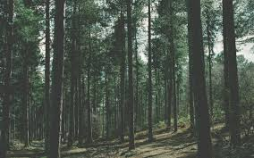 nature, Forest Wallpapers HD / Desktop ...