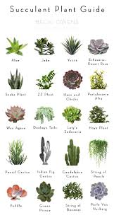 desert plants with names. Wonderful Names Letu0027s Talk About Indoor Plants I Will Admit That Have Had Many A  Challenges With Keeping Them Aliveu2026from The Ficus Tree Brought Into Bathroom  In Desert Plants With Names