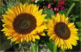 Blüten Und Kleinpflanzen Sprüche Und Zitate Schoene