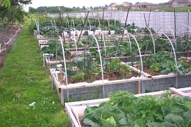 galvanized steel garden beds. see the galvanized steel garden bed plain beds corrugated throughout