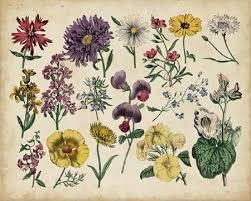 Botanical Chart Print Antique Botanical Chart Iv