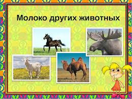 Проект Пейте дети молоко будете здоровы презентация слайда 9 Молоко других животных