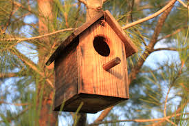 Bildresultat för birdhouse