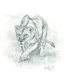 lioness hunting drawing. Exellent Drawing Lioness Face Drawing  Photo2 Throughout Hunting Drawing P