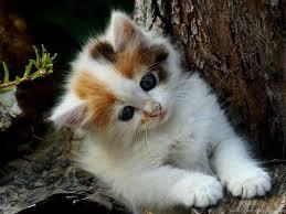 Cute Kitten Wallpapers For Desktop ...