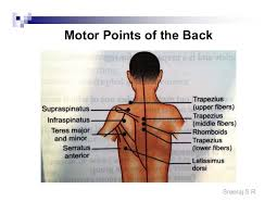 Motor Points For Electrical Stimulation Chart Electrical Stimulation Motor Points And Application