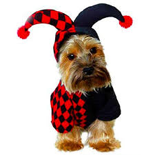 Where To Find Jester Dog Costume Atoya Reviews