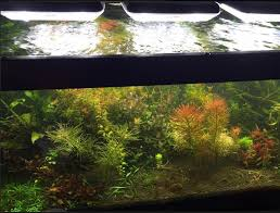 tmc grobeam and colour plus 1500 over high tech planted aquarium led light systems are easily complimented