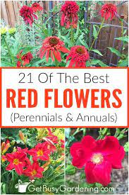 21 of the best red flowers perennials