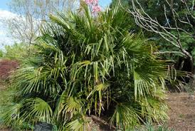 How To Identify Palm Trees