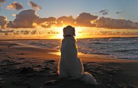 Risultati immagini per dog beach