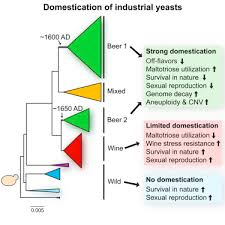 Red Star Wine Yeast Reference Chart Domestication And Divergence Of Saccharomyces Cerevisiae