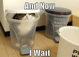 Cat waiting to pounce | Funny Dirty Adult Jokes, Memes & Pictures via Relatably.com