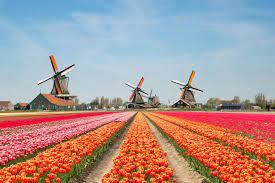Turist sayısını aşırı bulan Hollanda ülkenin tanıtımını yapmayı bırakacak