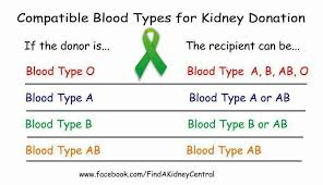 Compatible Blood Type For Kidney Donation Living Kidney