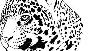 Cheetah Cub Coloring Pages Jaguar Coloring Page Jaguar Coloring