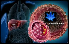 hepatitis c marijuana research papers hepatitis c medical marijuana research papers worldwide 2000 2017