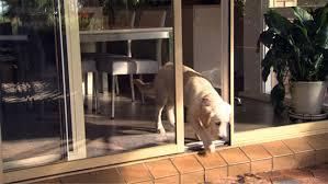 automatic pet sliding door