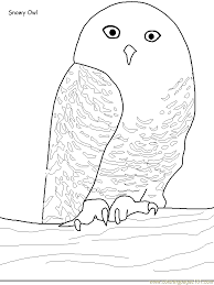 Small Picture Snowy Owl Coloring Page Free Owl Coloring Pages