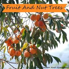 Growing NutsFruit And Nut Trees