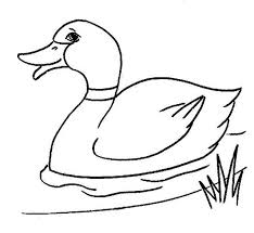 Small Picture Duck Coloring Pages Eldamiannet