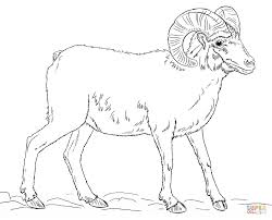 Small Picture Desert bighorn sheep coloring page Free Printable Coloring Pages