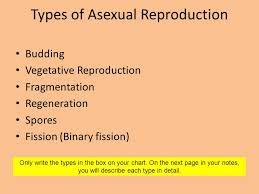 Title Your Page Sexual Vs Asexual Reproduction Notes